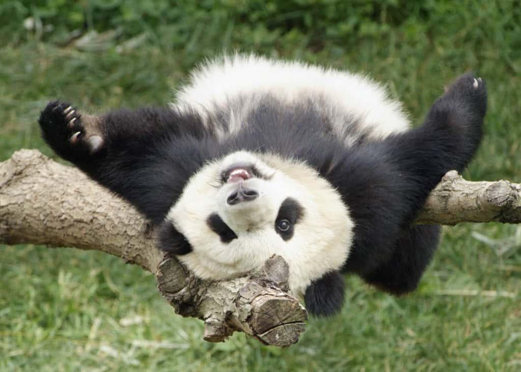 Wikimotive Google Panda